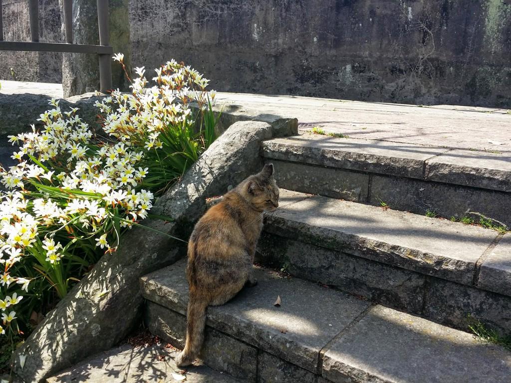 大浦展望公園 猫