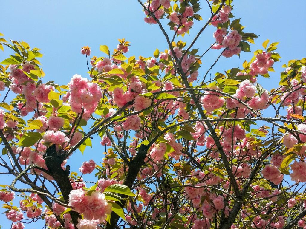グラバー園たくさんの花