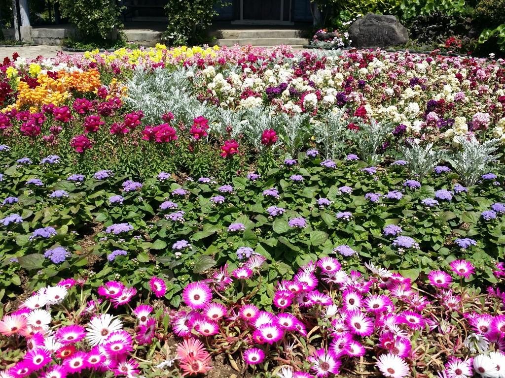 旧グラバー住宅前の花